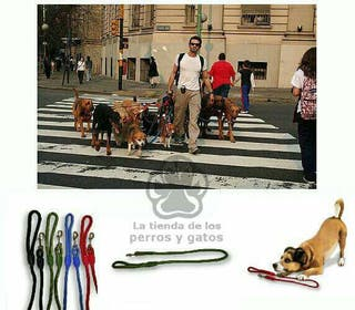 Correa de nailon redonda para perro