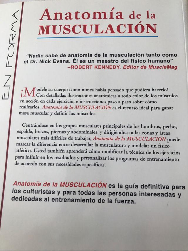 Famoso Anatomía Muscular Culturismo Modelo - Anatomía de Las ...