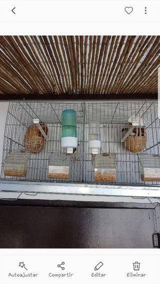 jaula de cría