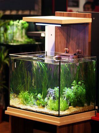 acuario aquatlantis aquacube