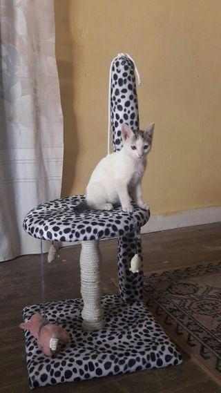 se hacen elevadores o rascadores de gato/gata