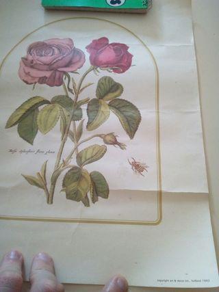 litografias antiguas