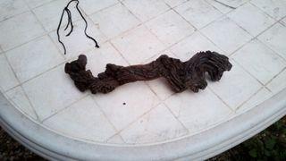tronco de acuario o terrario