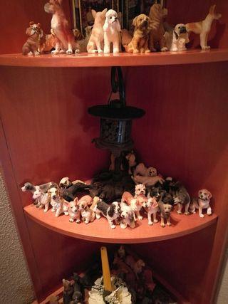 colección de perros y cachorros