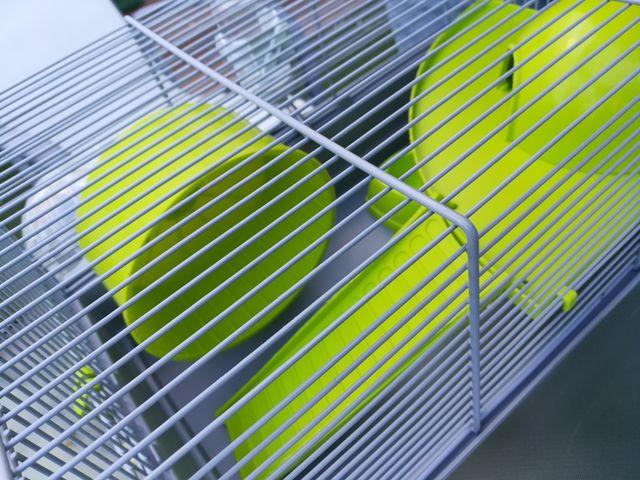 Jaula para hamster ruso + regalo accesorios