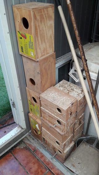 pack nidos agaporni y periquito