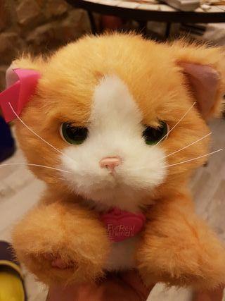 gato peluche real.