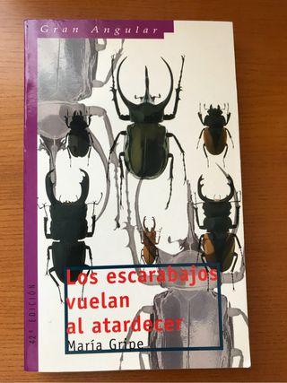 Escarabajos vuelan al atardece