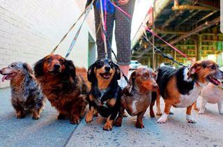 pasedora de perros