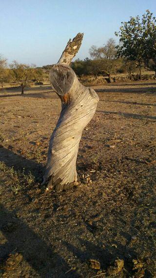 tronco decoración