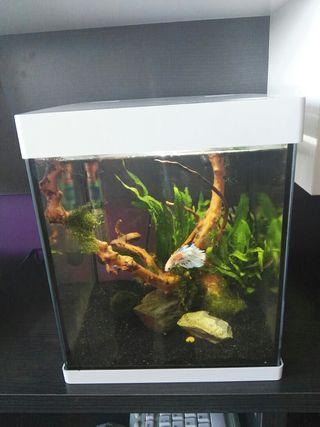 Nano acuario seminuevo