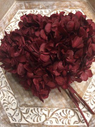 Hortensia preservada Natural