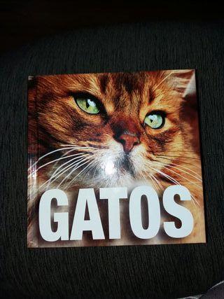 libro gatos