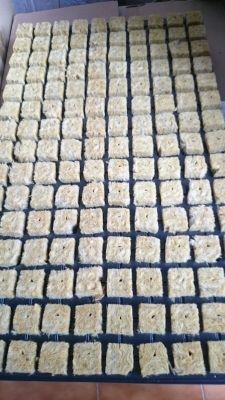 bandeja alveolos cultivo interior grow shop
