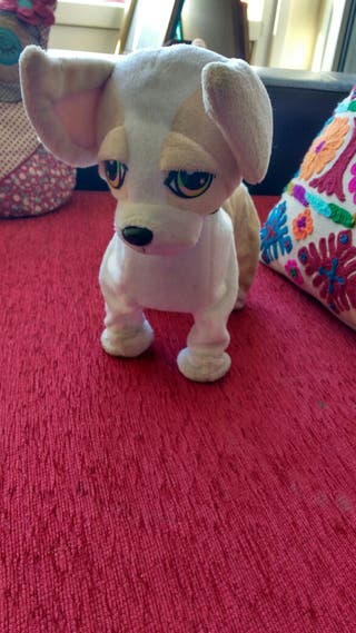 perro chihuahua, que canta, baila y anda bailando