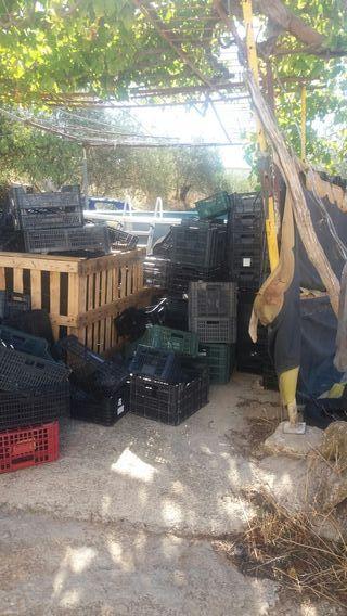 cajas plasticos,fruteria,hortalizas,fruta