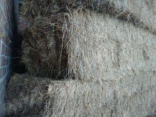 alpacas grandes de hierba seca
