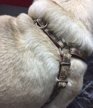 Arnés,correa y dispensador de bolsas perro