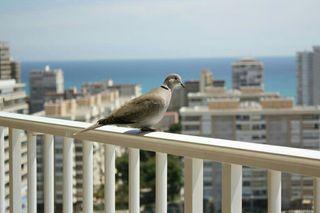 Apartamento Playa San Juan Alicante Vistas al Mar