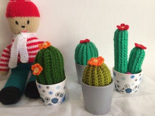 Cactus lana.