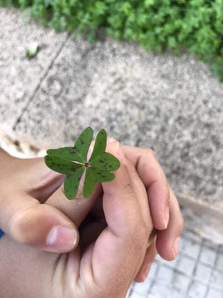 Trebol de 4 hojas