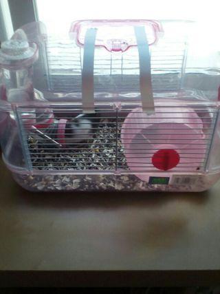 jaula hamster con hamster