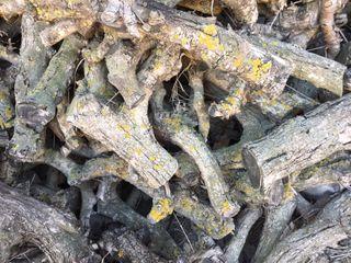 Leña seca de olivo para brasas