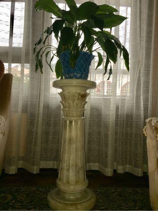 Columba de alabastro