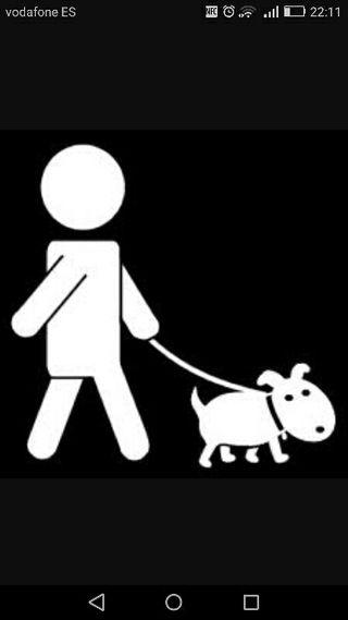 saco perros y cuido animales