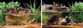 Filtro roca tortuga grande Exo Terra