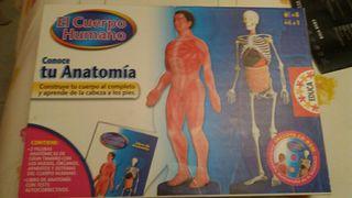 conoce tu anatomia.