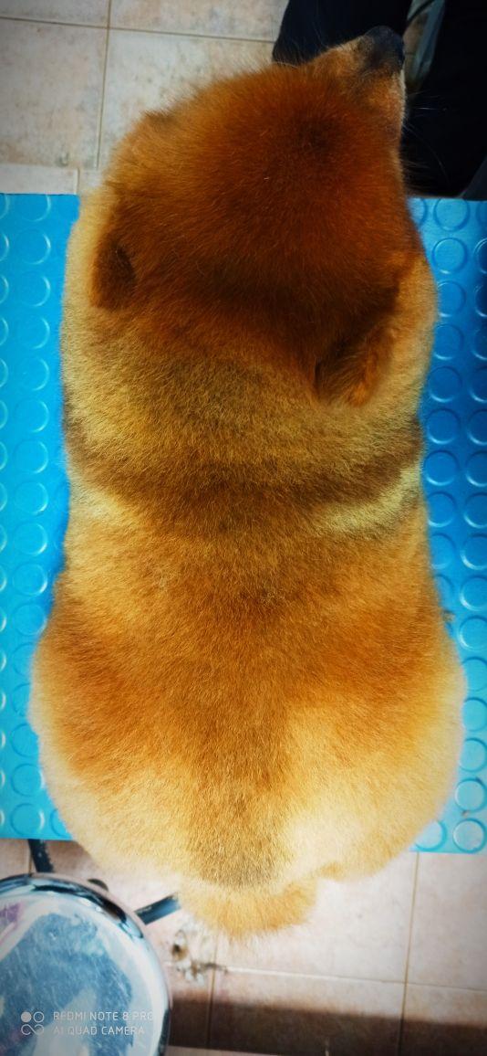 peluquero canino