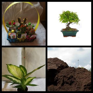 Plantas, abonos y mantillo