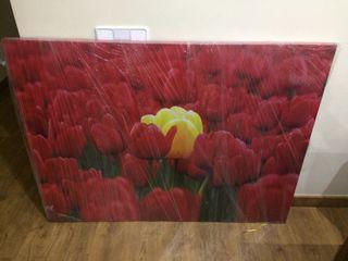 Cuadro Foto Tulipanes