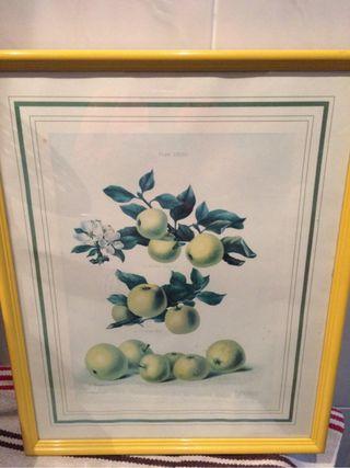 Cuadro frutas