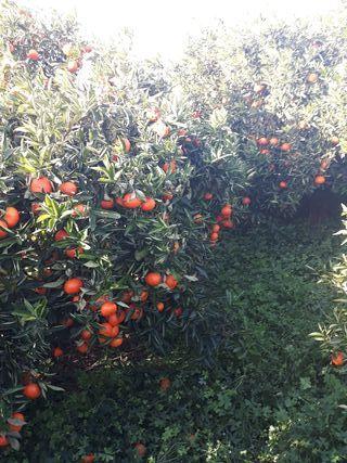 busco personal para corte de naranja