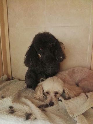 peluquera canina a domicilio