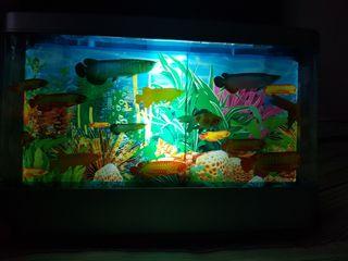 Lámpara acuario