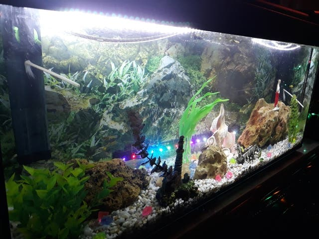 acuario completo
