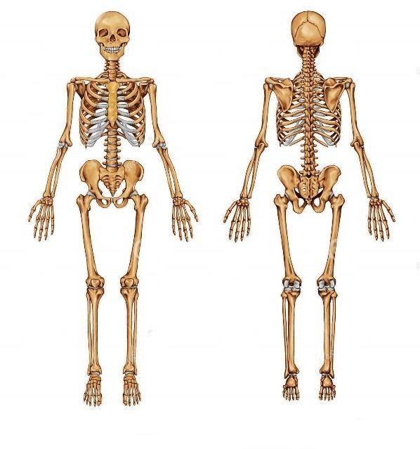 Clases de Anatomia (Primaria,E.S.O,Bachillerato) de segunda mano por ...