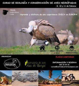 Curso de Aves Necrófagas
