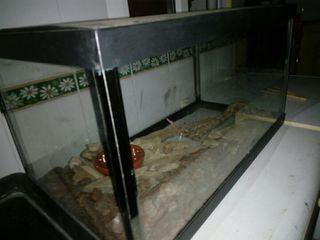 Aquario / terrario