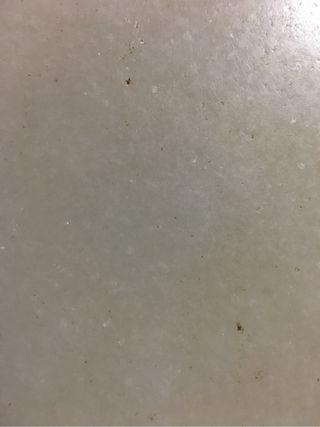cocho iberico cebao