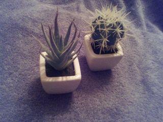 juego dos Plantas