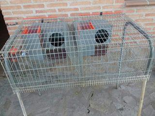 dos jaulas para conejos