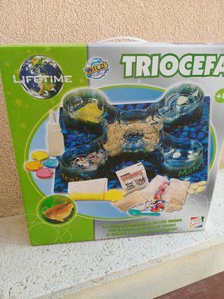 Triocefa
