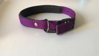 Collar perro lila + regalo