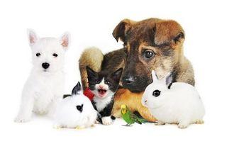Cuido paseo animales perros, gatos, mascotas
