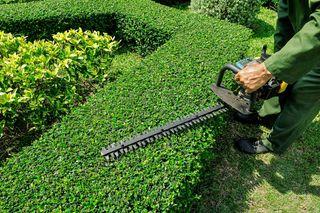 Mantenimiento de jardines Jardinero X Hora Semanal