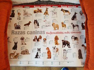 Poster de Razas de Perro